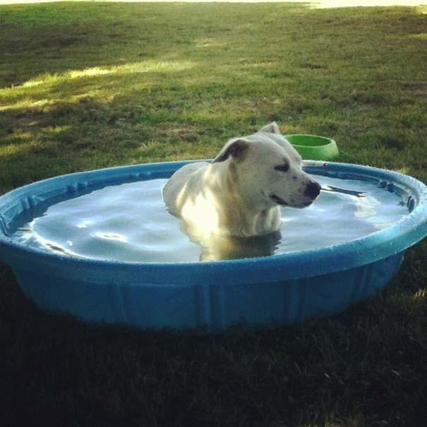 Σκύλοι που απολαμβάνουν το δικό τους Pool Party (5)
