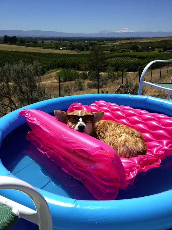 Σκύλοι που απολαμβάνουν το δικό τους Pool Party (9)