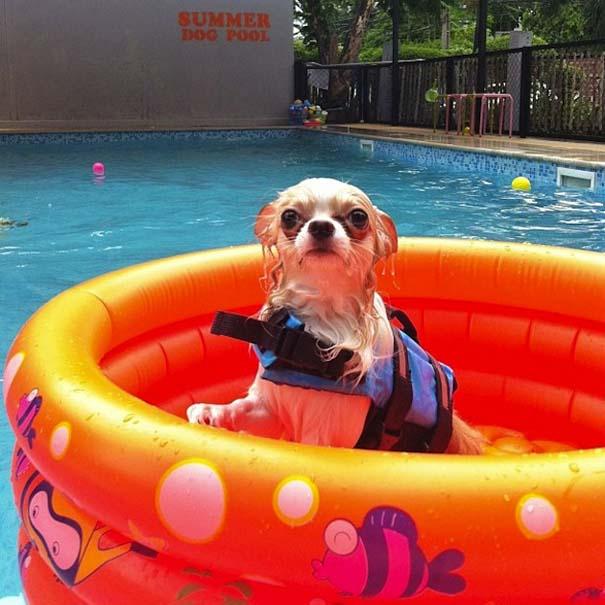 Σκύλοι που απολαμβάνουν το δικό τους Pool Party (10)