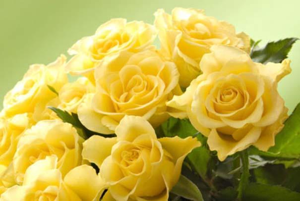 Τι συμβολίζουν τα τριαντάφυλλα (6)