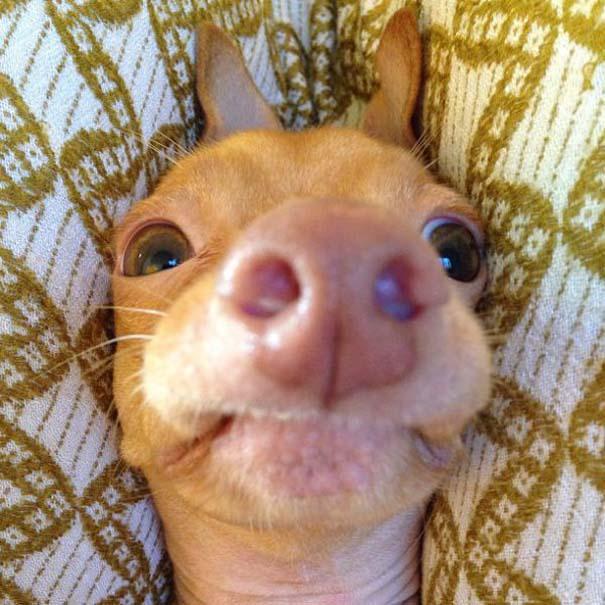 Tuna: Ο διάσημος «άσχημος» σκύλος (1)