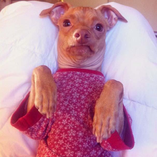 Tuna: Ο διάσημος «άσχημος» σκύλος (6)