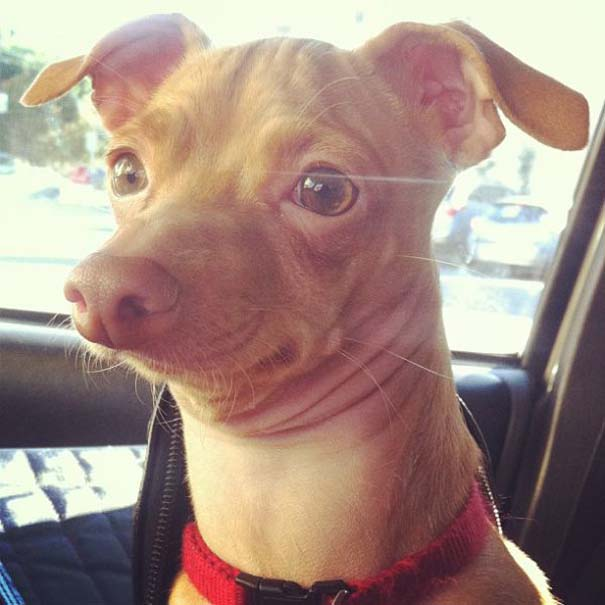 Tuna: Ο διάσημος «άσχημος» σκύλος (7)