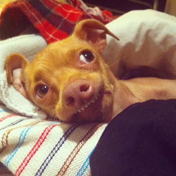 Tuna: Ο διάσημος «άσχημος» σκύλος (12)