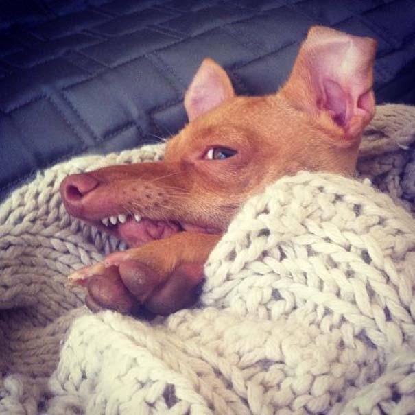 Tuna: Ο διάσημος «άσχημος» σκύλος (14)