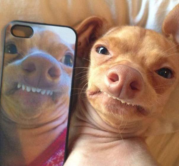 Tuna: Ο διάσημος «άσχημος» σκύλος (16)