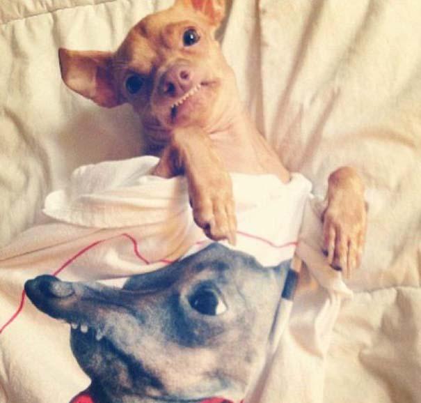 Tuna: Ο διάσημος «άσχημος» σκύλος (19)