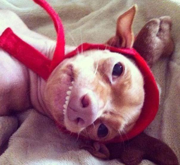 Tuna: Ο διάσημος «άσχημος» σκύλος (20)