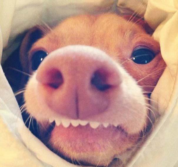 Tuna: Ο διάσημος «άσχημος» σκύλος (21)