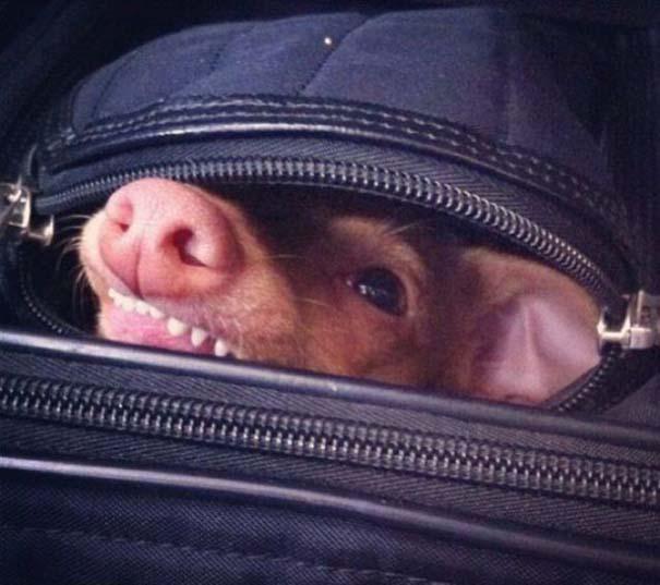 Tuna: Ο διάσημος «άσχημος» σκύλος (22)