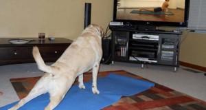 Η Yoga στα πιο ξεκαρδιστικά της