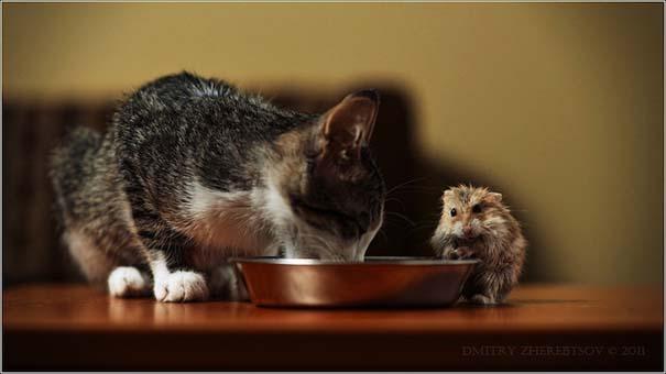 Υπέροχες φωτογραφίες φιλίας ζώων που θα σας φτιάξουν τη διάθεση (2)