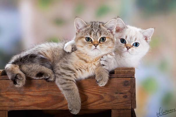 Υπέροχες φωτογραφίες φιλίας ζώων που θα σας φτιάξουν τη διάθεση (3)