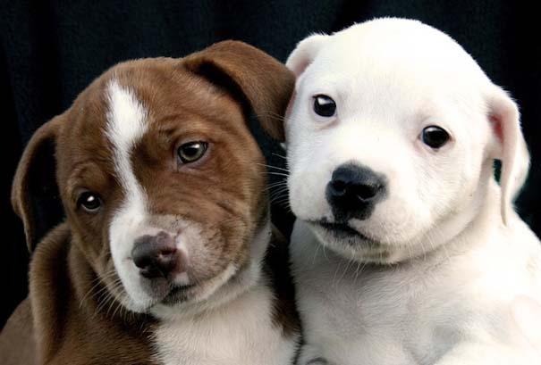 Υπέροχες φωτογραφίες φιλίας ζώων που θα σας φτιάξουν τη διάθεση (8)
