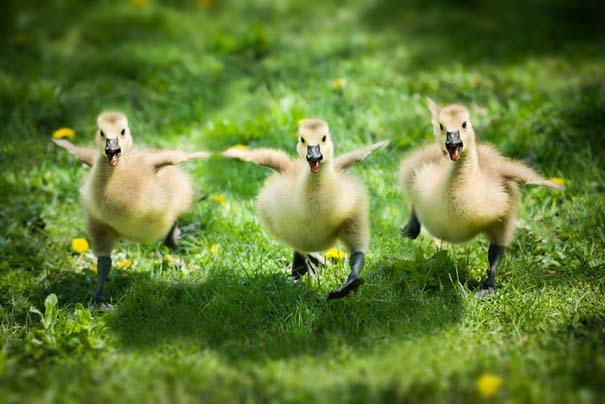 Υπέροχες φωτογραφίες φιλίας ζώων που θα σας φτιάξουν τη διάθεση (10)