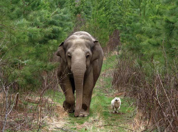 Υπέροχες φωτογραφίες φιλίας ζώων που θα σας φτιάξουν τη διάθεση (12)