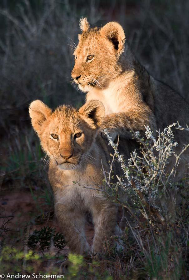 Υπέροχες φωτογραφίες φιλίας ζώων που θα σας φτιάξουν τη διάθεση (17)
