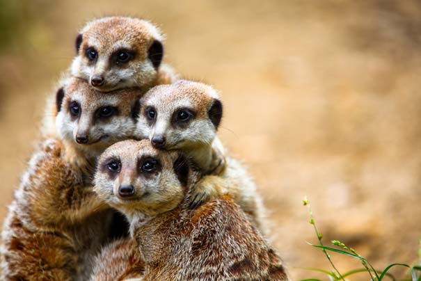 Υπέροχες φωτογραφίες φιλίας ζώων που θα σας φτιάξουν τη διάθεση (19)
