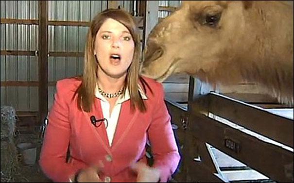 Ζώα εναντίον ρεπόρτερ