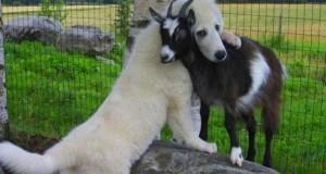 10 μοναδικές αγκαλιές στο ζωικό βασίλειο