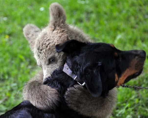 Αγκαλιές ζώων (2)