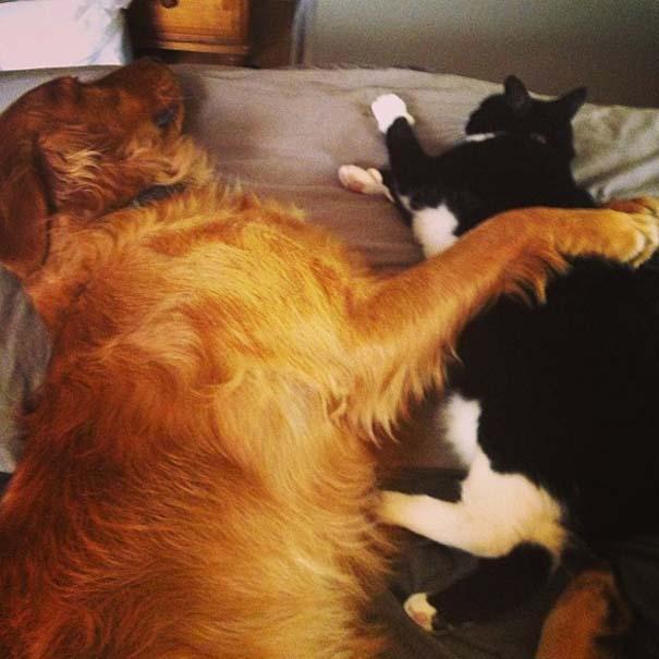 Αγκαλιές ζώων (3)