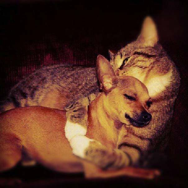 Αγκαλιές ζώων (4)