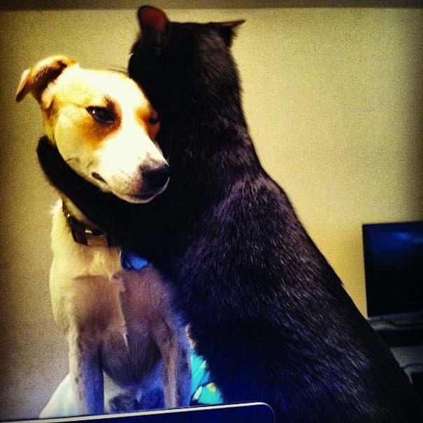 Αγκαλιές ζώων (5)