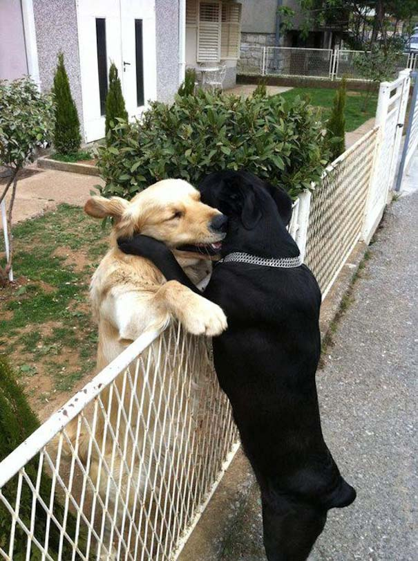Αγκαλιές ζώων (6)