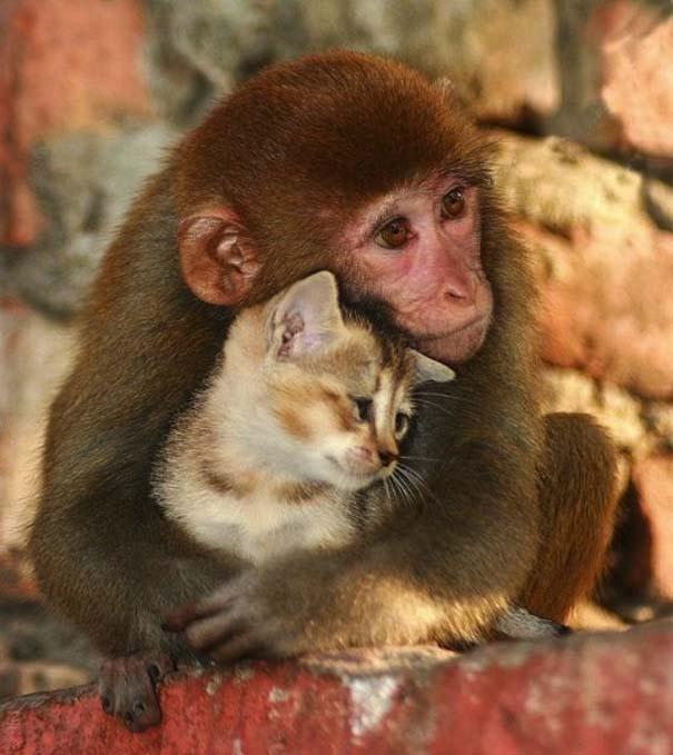 Αγκαλιές ζώων (9)