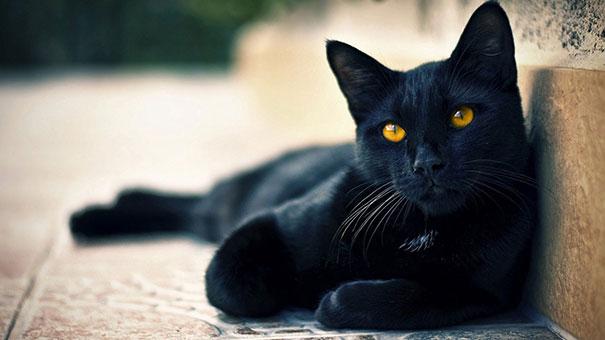 Η αντίδραση μιας γάτας στην επιστροφή του ιδιοκτήτη της μετά από 6 μήνες