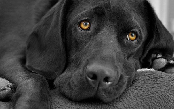 Η αντίδραση ενός σκύλου στην επιστροφή του ιδιοκτήτη του μετά από 6 μήνες