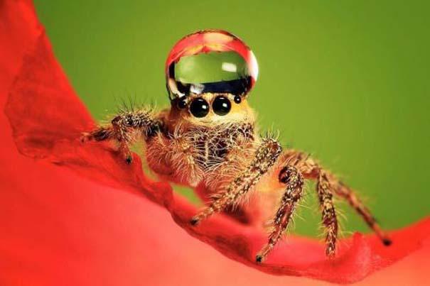 Αράχνες ποζάρουν φορώντας καπέλα από σταγόνες νερού (1)
