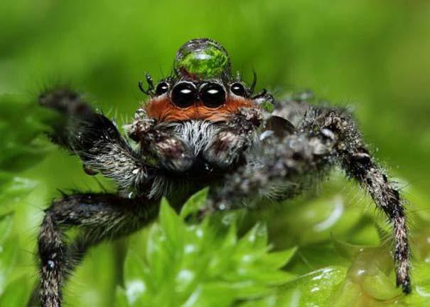 Αράχνες ποζάρουν φορώντας καπέλα από σταγόνες νερού (3)