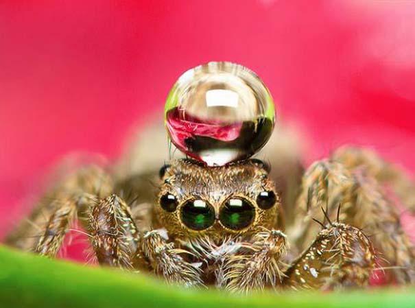 Αράχνες ποζάρουν φορώντας καπέλα από σταγόνες νερού (4)