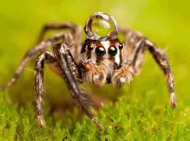 Αράχνες ποζάρουν φορώντας καπέλα από σταγόνες νερού (5)