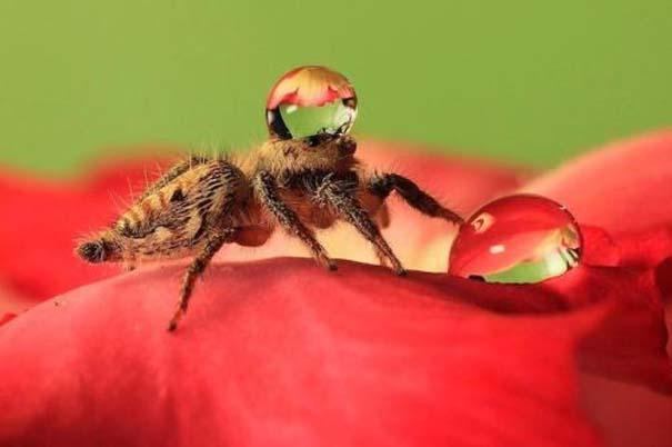 Αράχνες ποζάρουν φορώντας καπέλα από σταγόνες νερού (8)