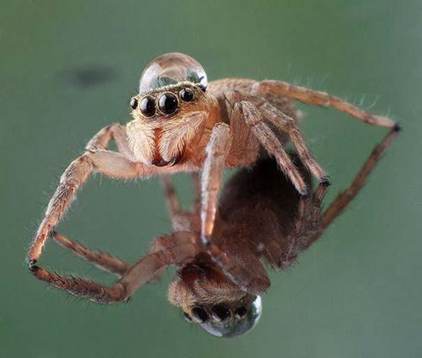 Αράχνες ποζάρουν φορώντας καπέλα από σταγόνες νερού (10)