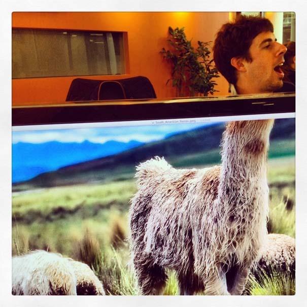 Desk Safari: Παίζοντας με τους συναδέλφους στο γραφείο (14)