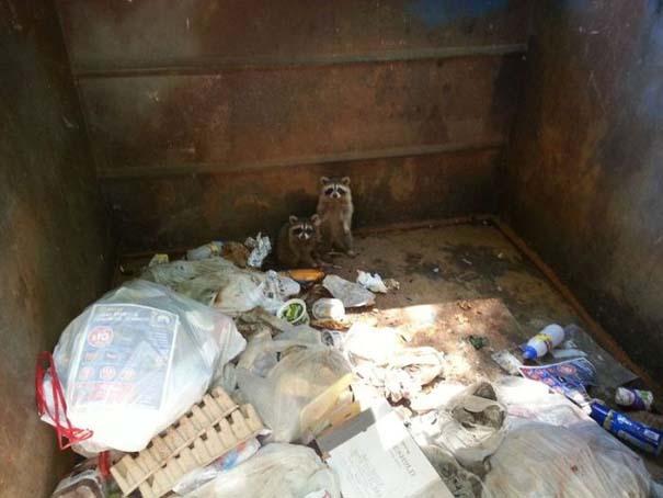 Διάσωση Raccoon (1)