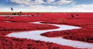 Η εκπληκτική Κόκκινη Παραλία στο Panjin της Κίνας