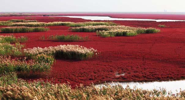 Η εκπληκτική Κόκκινη Παραλία στο Panjin της Κίνας (2)