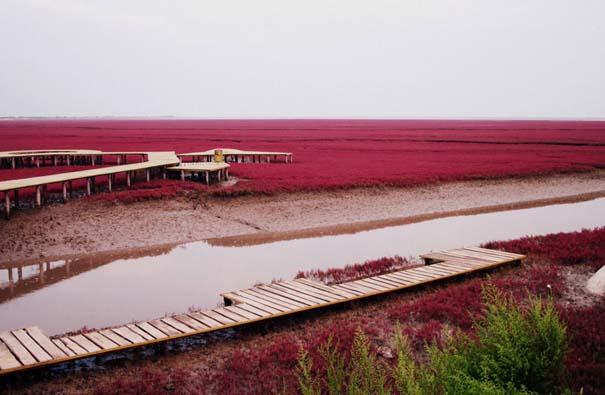 Η εκπληκτική Κόκκινη Παραλία στο Panjin της Κίνας (3)