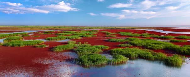 Η εκπληκτική Κόκκινη Παραλία στο Panjin της Κίνας (8)