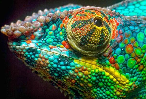 Υπέροχες φωτογραφίες στα χρώματα του ουράνιο τόξου (11)
