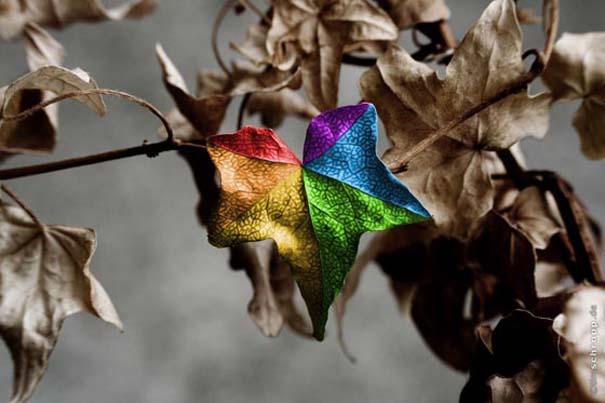 Υπέροχες φωτογραφίες στα χρώματα του ουράνιο τόξου (13)