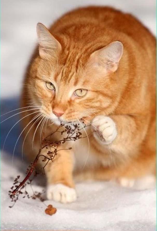 Μια γάτα δοκιμάζει νέες γεύσεις (1)