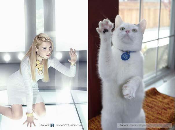 Γάτες αναπαριστούν πιερίεργες πόζες μοντέλων (1)