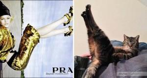 22 γάτες που αναπαριστούν περίεργες πόζες μοντέλων