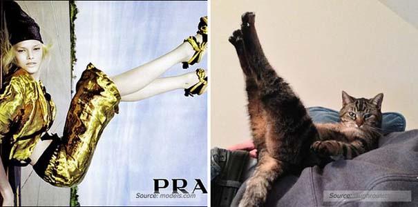 Γάτες αναπαριστούν πιερίεργες πόζες μοντέλων (3)